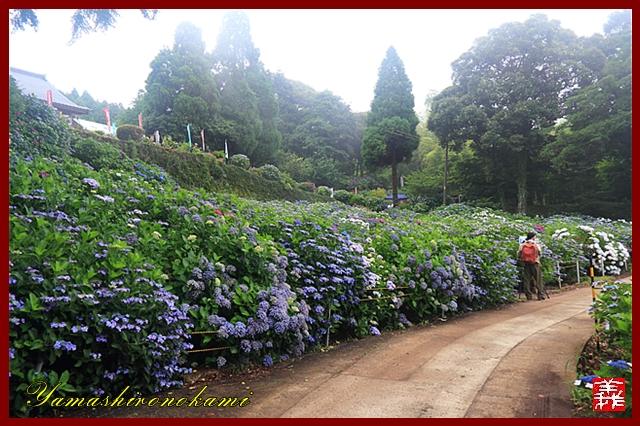 s-20130622-杉岳山大聖寺0090