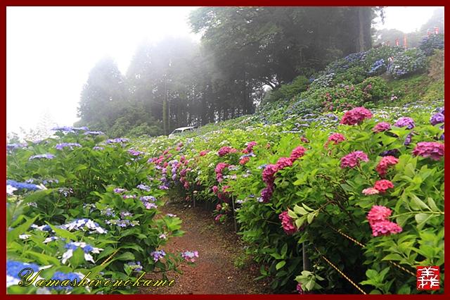 s-20130622-杉岳山大聖寺0080