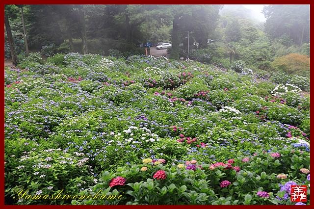 s-20130622-杉岳山大聖寺0019