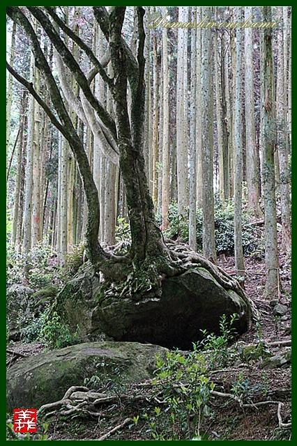 s-20130518両子寺035