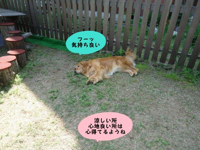 004_20130525134130.jpg
