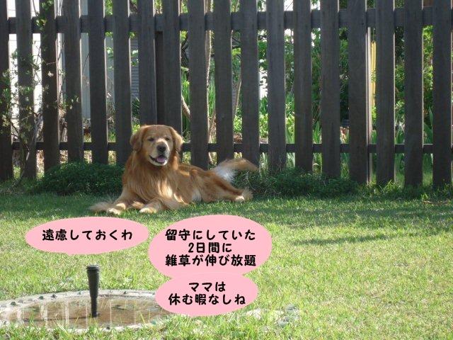 009_20130513212028.jpg