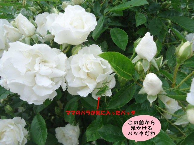 011_20130531205346.jpg