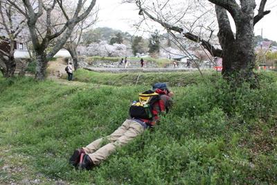 20130401 ニコンちゃんで撮るマサさん