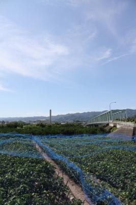 20130710麻生津大橋4