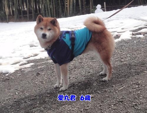 20140212茅ケ崎4