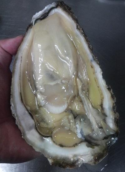 岩牡蠣2013