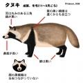 c_tanuki.jpg