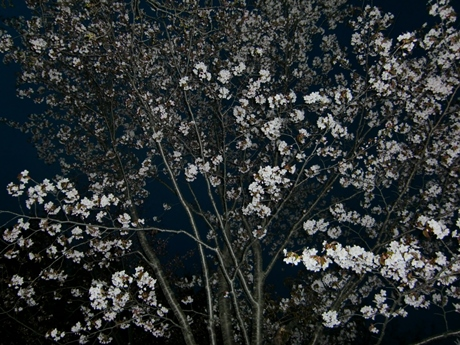 まだ20本くらいの開花です。