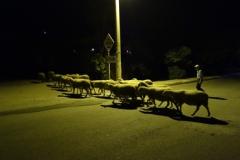 パムッカレ 羊