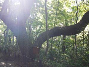自然教育園5