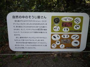 自然教育園12