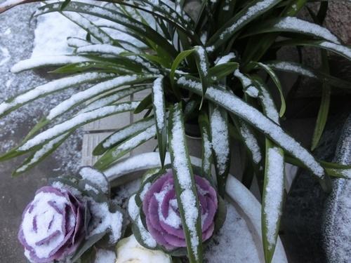 初雪26年1月19日-2