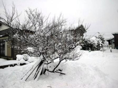 除雪141214f