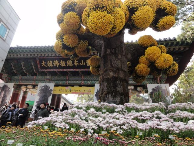 2013年10月27日 チョゲサ菊祭 門1