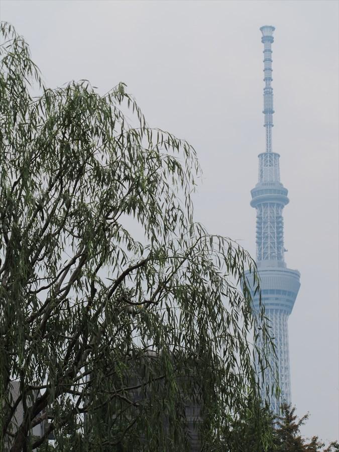 浅草寺風情01柳とスカイツリー03