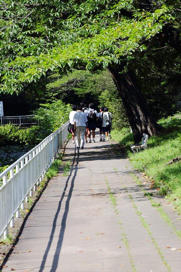 仙台夏休日みちばた03