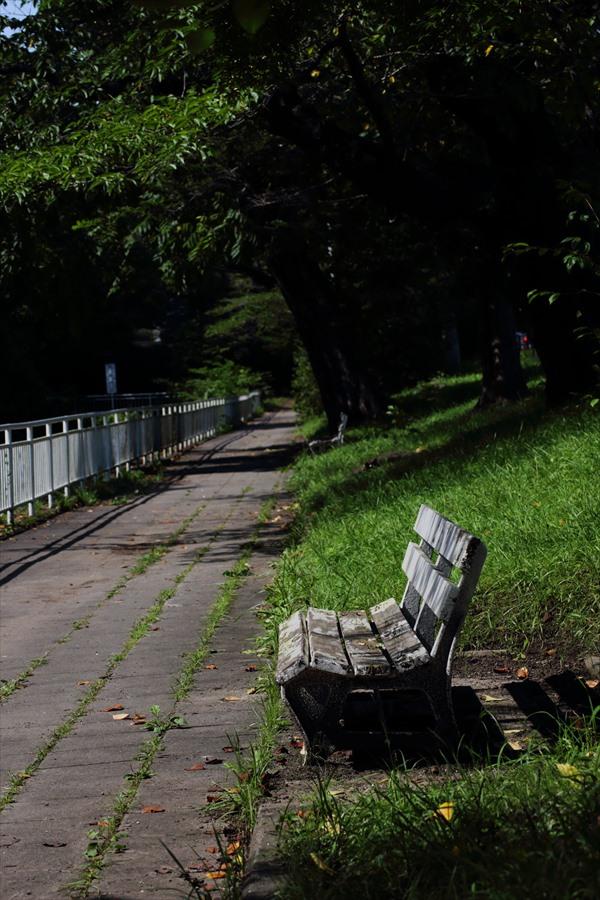 仙台の夏の休日ベンチ01