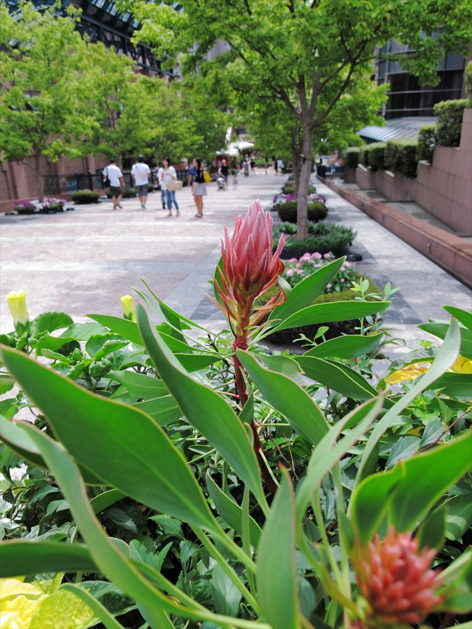 恵比寿ガーデンプレイス花壇04