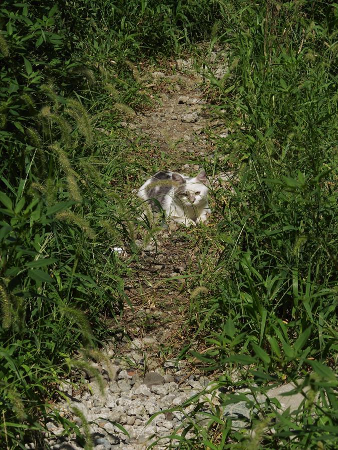 川崎スナップ02小道の猫01