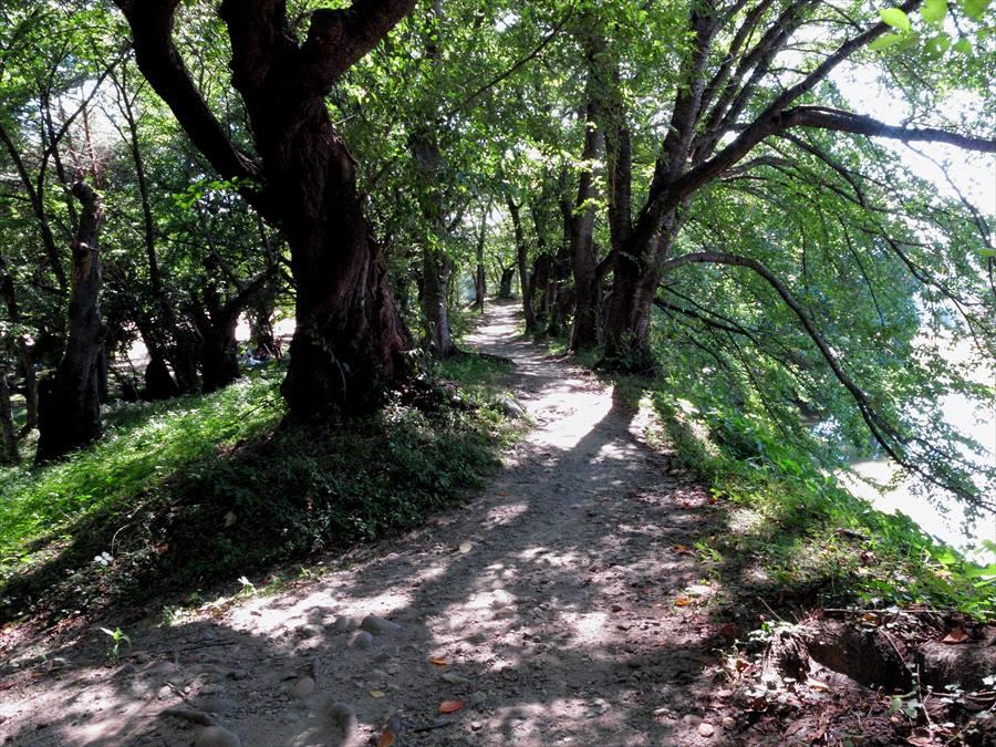 山形市内スナップ霞城土塁の道01