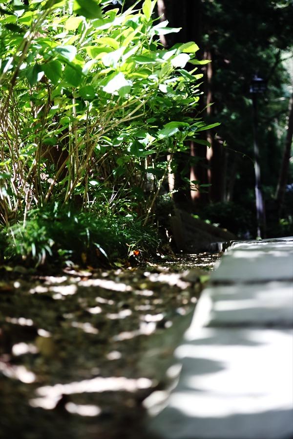 EOS学園瑞鳳殿講座03木漏れ日02