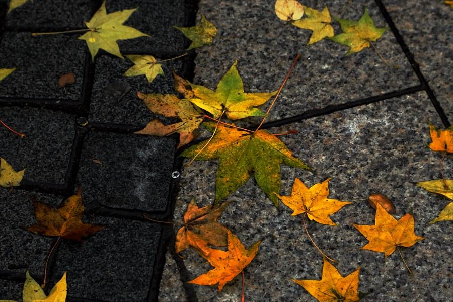 札幌大通り01落ち葉05