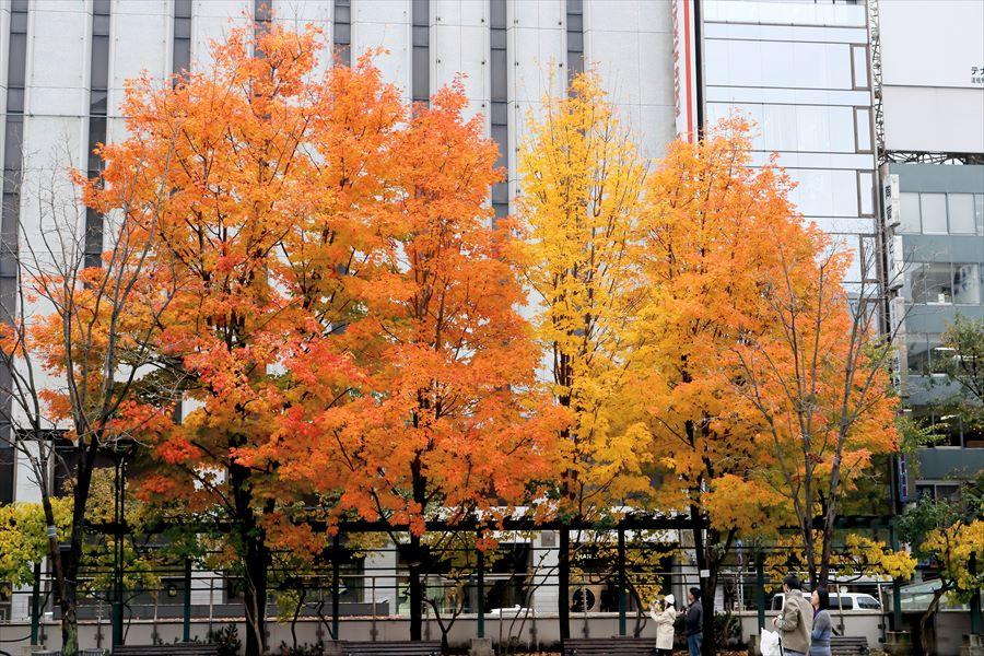 札幌大通り02紅葉05