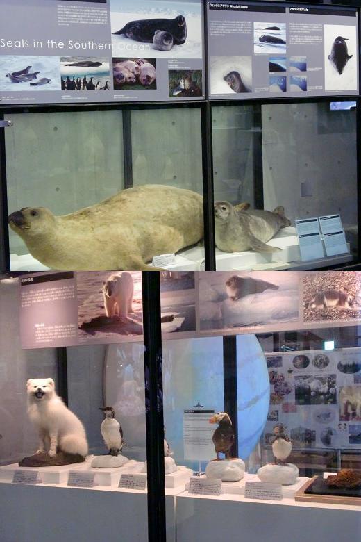 極地の生き物たち