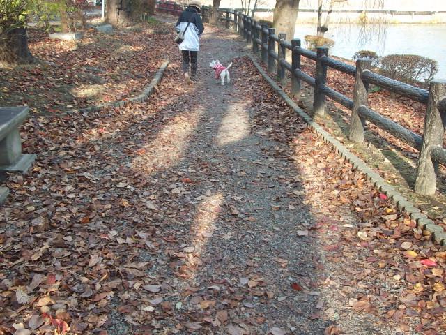 楽しい散歩
