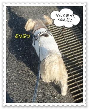 DSC03348_201411080634379d0.jpg