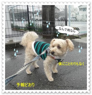DSC04435.jpg
