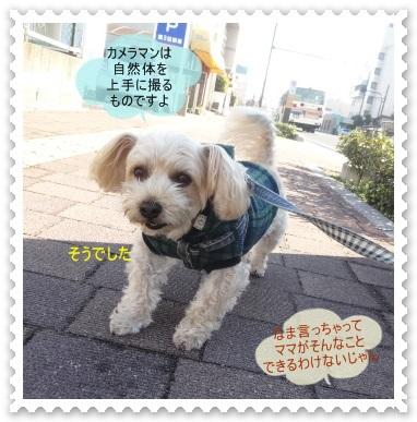 DSC04482_20141214003056fa1.jpg