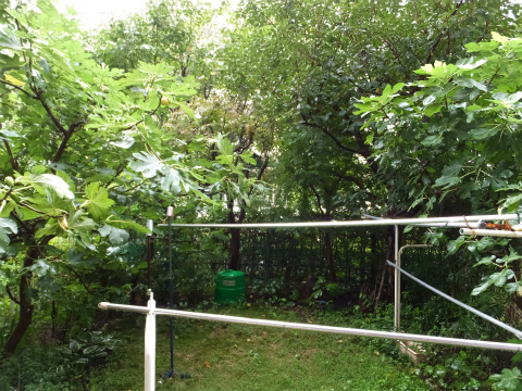 ボウボウの庭