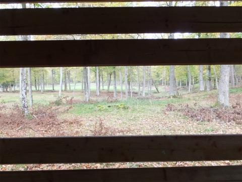 鹿の観察小屋4