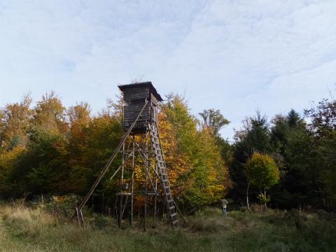 10月末の森1
