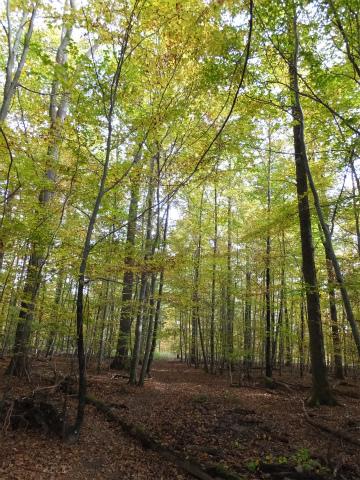 10月末の森2