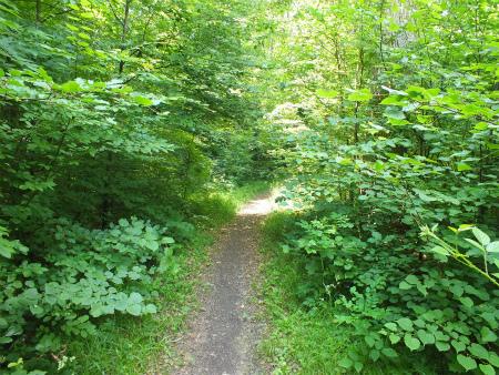 7月の森1