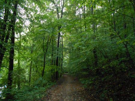 アヴェの森1