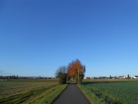 ボウボウの畑道