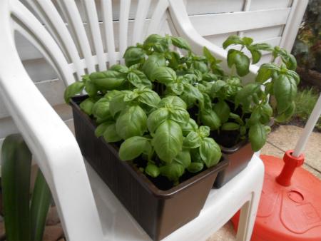 家庭菜園9