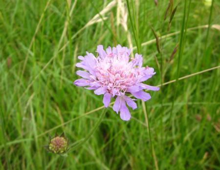 野原の花10