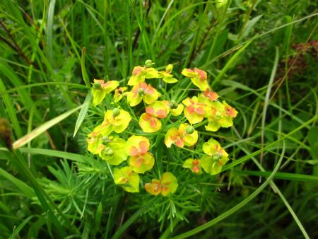野原の花1
