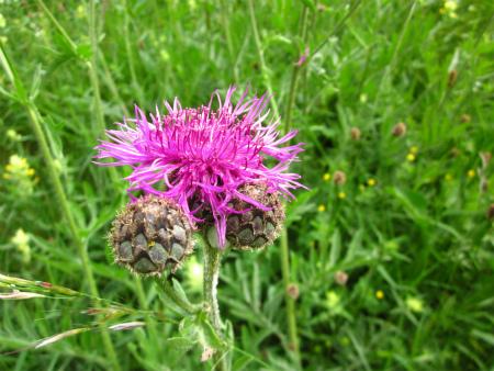 野原の花2
