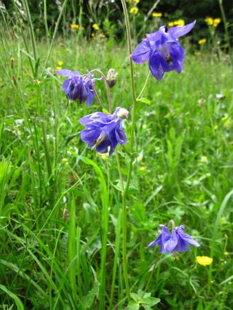 野原の花4