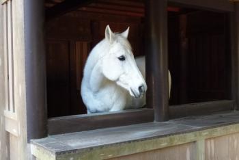 馬(  )