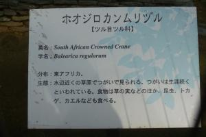 ホオジロカンムリヅル 案内板