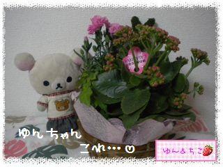 ちこちゃん日記★162★母の日でしゅ-2