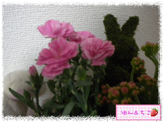 ちこちゃん日記★162★母の日でしゅ-3