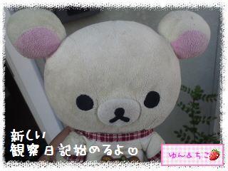ちこちゃんのキャベツ観察日記★1★始めましゅ-1